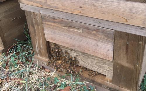 蜂蜜の栽培