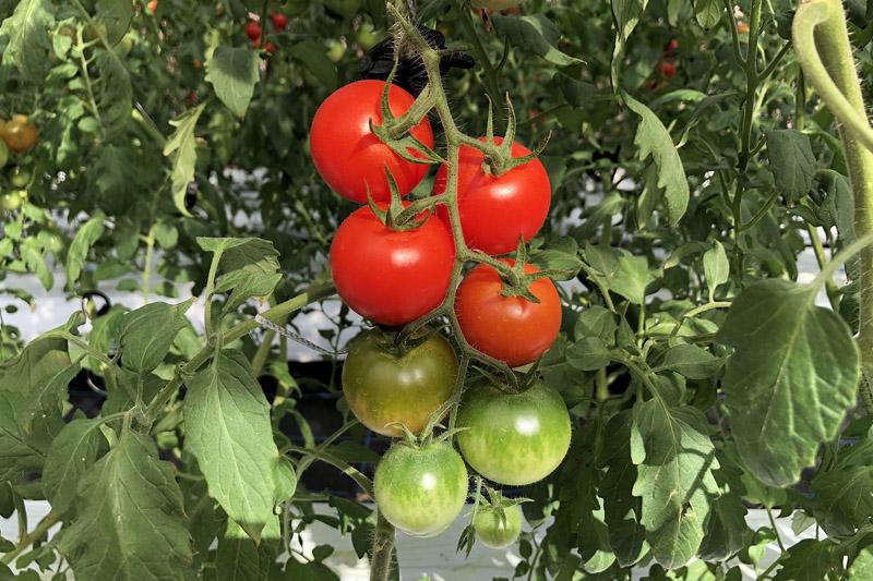 アイメック農法2のポイント