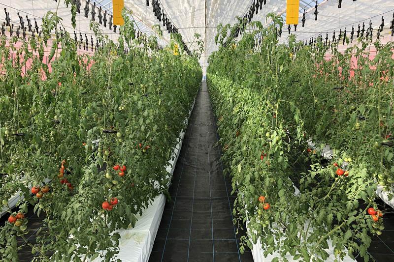 アイメック農法1